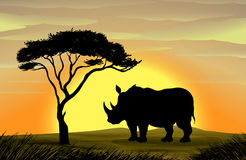 Rhinoceros under a tree Royalty Free Stock Photo