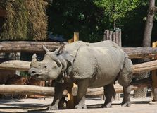 Rhinoceros . Vienna, Austria Royalty Free Stock Photography