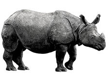 Rhinoceros. Vintage gravure style effect Royalty Free Stock Photos