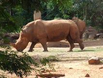 Rhinoceros. Walk in the zoo Stock Photo
