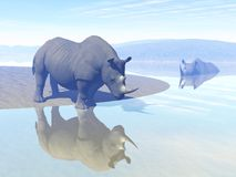 Rhinoceros and water Stock Photos