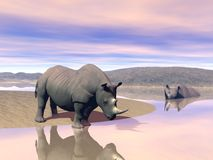Rhinoceros and water Stock Photography