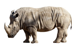 Rhinoceros on white background Stock Photo