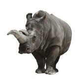 Rhinoceros On White Background Royalty Free Stock Image