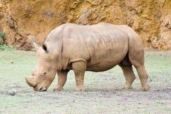Rhinoceros Stock Photos