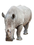 Rhinoceros on white with clipping path Royalty Free Stock Images