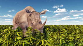 Rhinoceros in the wild Royalty Free Stock Photography