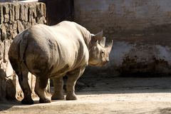 Rhinoceros in the zoo Stock Images