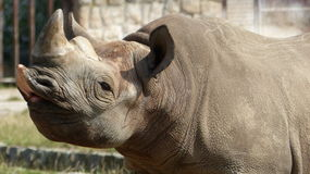 A rhinoceros. In Zoo in central bohemia Stock Image