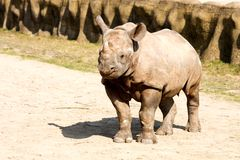 Rhinoceros in the zoo Stock Photo