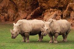 Rhinocerotidae Stock Photo