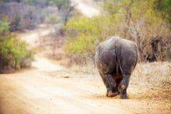 Rhinocerous идя прочь вниз с дороги Стоковые Фотографии RF