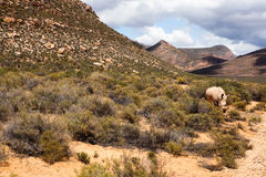 Rhinocerous in African landscape Royalty Free Stock Photo