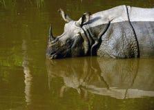 Rhinocerous ha messo in pericolo immagine stock