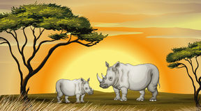 Rhinocerous Royalty Free Stock Image