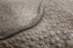 Rhinocheros texture Stock Images