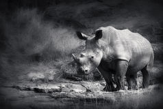 Rhinocéros blanc Photo stock