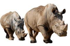Rhinocéros deux blanc d'isolement Photographie stock