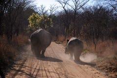 Rhinos Lizenzfreies Stockbild