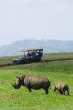 Rhinos africani Fotografie Stock Libere da Diritti
