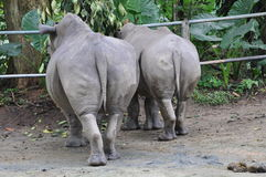 Rhinos butt Royalty Free Stock Images