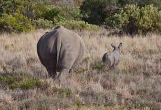 Rhinos delle coppie Fotografia Stock Libera da Diritti