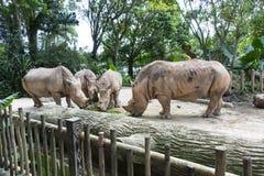 Rhinos en parque zoológico Foto de archivo