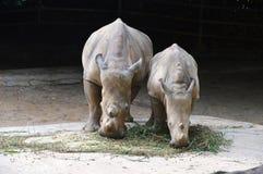 Rhinos Stock Photography