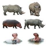 Rhinos und Flusspferde Stockfoto