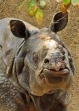 Rhinosaurus Royalty Free Stock Images