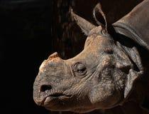 Rhinosaurus Stock Photo