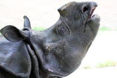 Rhinosaurus Royalty Free Stock Photo