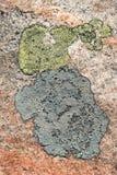 rhizocarpon карты лишайника geographicum Стоковая Фотография RF