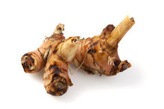 Rhizome of Galangal Stock Photo