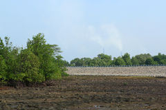 Rhizophora Mangrove Mudflats and air pollution Stock Images