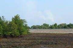 Rhizophoramangrove Mudflats en luchtvervuiling stock afbeeldingen