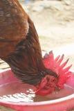 Rhode - vermelho da ilha Fotos de Stock