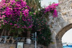 Ancient arch in old wall of Rhodes town with purple bougainvillea flowers in Rhodes town on Rhodes island, Greece. RHODES, GREECE - AUGUST 2017: Ancient arch in Royalty Free Stock Image