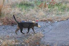 Rhodes semi-wild cat royalty free stock photos
