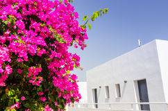 Rhodes summer contrasts Stock Photography