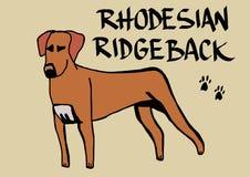 Rhodesian ridgeback Royalty-vrije Stock Foto