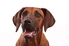 Dog face, happy and smiling stock photo