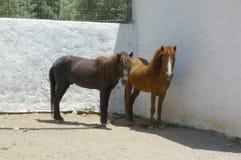 Rhodianpaard Rhodos, Griekenland, Griekse Eilanden Stock Foto