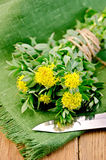 Rhodiola rosea with a knife on the board Royalty Free Stock Images