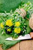 Rhodiola rosea with a knife and coil of rope Stock Photography