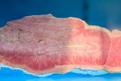 Rhodochrosite stalactitic habit rock specimen from mining and qu Stock Images