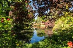 Rhododendren et jardins d'azalée images libres de droits