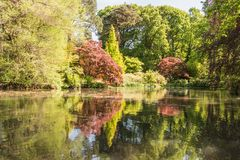 Rhododendren et jardins d'azalée photos libres de droits