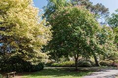 Rhododendren et jardins d'azalée Photo libre de droits