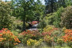 Rhododendren et jardins d'azalée photographie stock